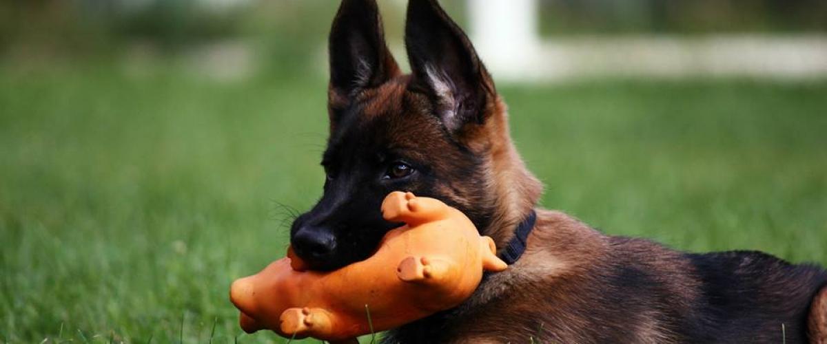 Воспитание щенка